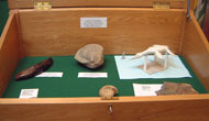 Fossil display in a South Gloucestershire Library.